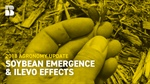 Agronomy Update: Soybean Emergence & ILeVO Effects