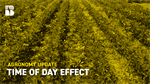 Agronomy Update: The Time of Day Effect with the Roundup Ready 2 Xtend System