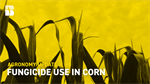 Agronomy Update: Fungicide Use in Corn