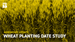 Agronomy Update: Wheat Planting Date Study