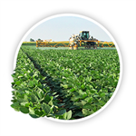PFR Report: Fungicide Applications On Soybeans