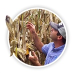 PFR Report: Foliar Fungicide Study on Corn