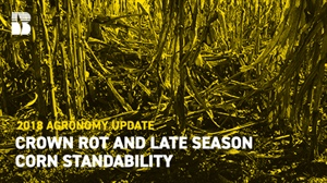 Agronomy Update: Crown Rot and Late-Season Corn Standability