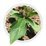 "PFR Report: ""Easy Button"" Weed Control"