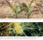 CropTalk: Unplanted Acres: Utilizing the Silent Partners in Your Soil