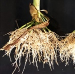 PFR Report: FLEXIBILITY IN YOUR NITROGEN PROGRAM