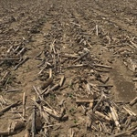 agronomy talk: residue management