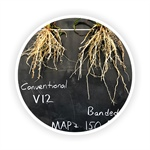 PFR Report: Nutrient Management Study: Broadcast vs. Banded