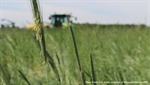 CropTalk: Cover Crop Management for Success