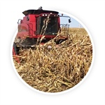 PFR Report: Harvesting Derecho-Damaged Down Corn