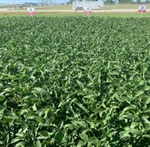 Weed Management Brief: ALTERNATIVE SOLUTIONS — ROW WIDTH