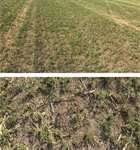CropTalk: Alfalfa Planting Considerations and Assessing Stands