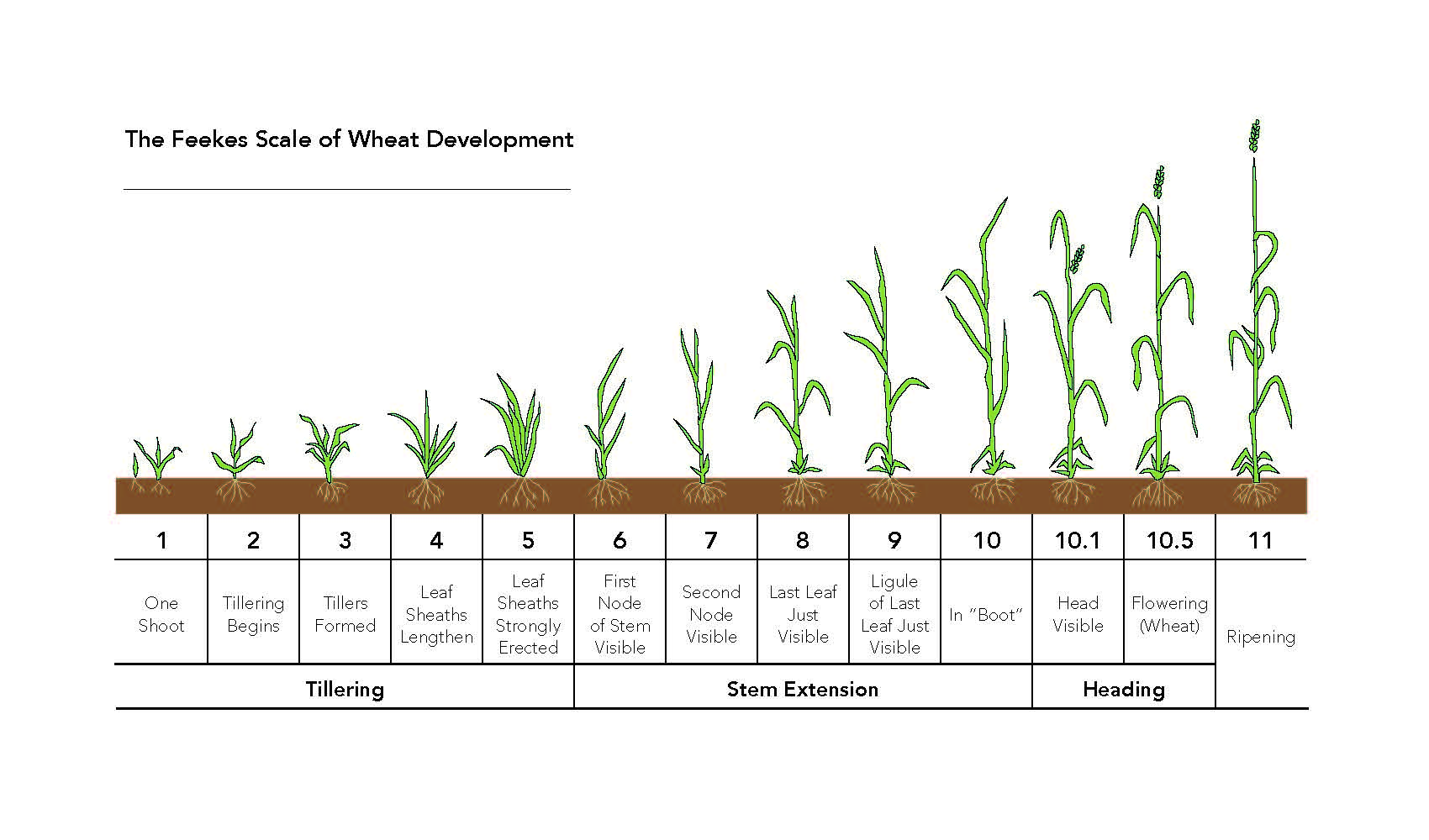 Agronomy update leave a comment nvjuhfo Images