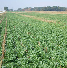 Manage Soil Health, Reduce Soil Compaction With Cover ...