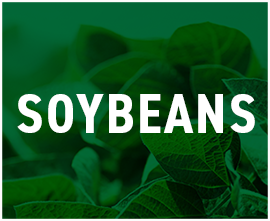 Soybean-Products