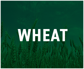 Wheat-Products